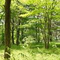 写真: 緑の林。。