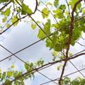写真: 花菜ガーデン-221