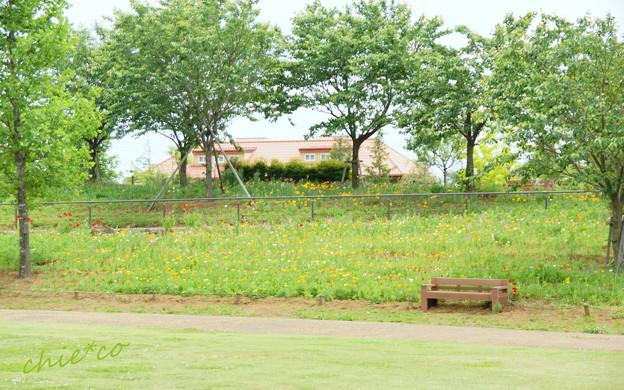 写真: 花菜ガーデン-228