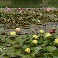 写真: 花菜ガーデン-239