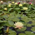 写真: 花菜ガーデン-242