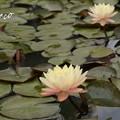 写真: 花菜ガーデン-243