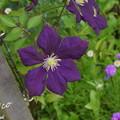 写真: 花菜ガーデン-260