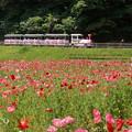 写真: くりはま花の国-274