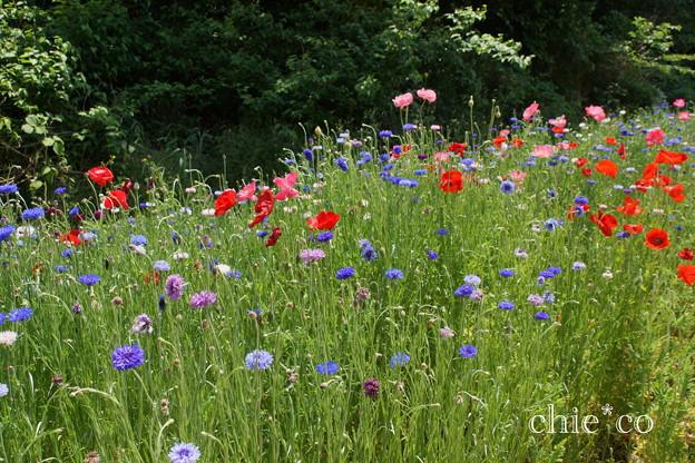 写真: くりはま花の国-276