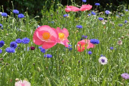くりはま花の国-277