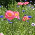 写真: くりはま花の国-277