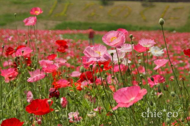 くりはま花の国-282