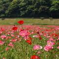 写真: くりはま花の国-283