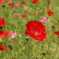 写真: くりはま花の国-296