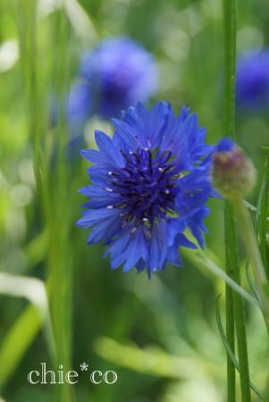 くりはま花の国-298