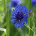 写真: くりはま花の国-298