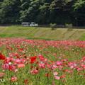 写真: くりはま花の国-301