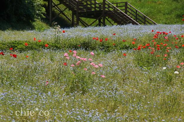 写真: くりはま花の国-304