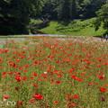 写真: くりはま花の国-305