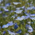写真: くりはま花の国-309