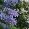 写真: 瀬戸神社~山あじさい-376
