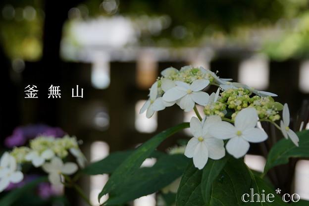 瀬戸神社~山あじさい-381