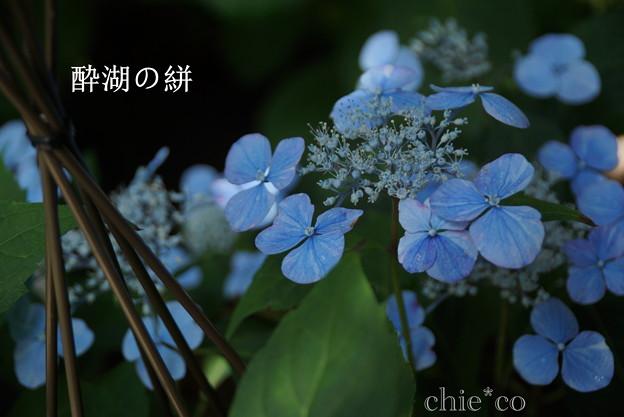 瀬戸神社~山あじさい-384