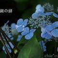 写真: 瀬戸神社~山あじさい-384