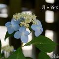 写真: 瀬戸神社~山あじさい-392