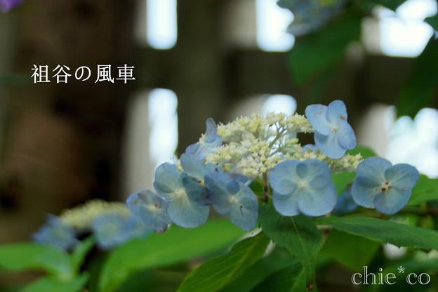 写真: 瀬戸神社~山あじさい-394
