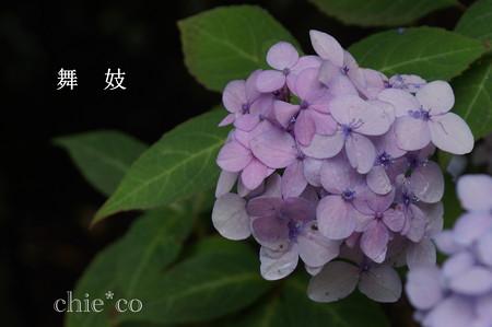 瀬戸神社~山あじさい-403