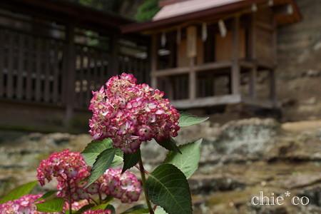 瀬戸神社~山あじさい-430