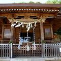 写真: 瀬戸神社~山あじさい-445