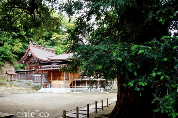 瀬戸神社~山あじさい-446