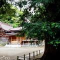 写真: 瀬戸神社~山あじさい-446