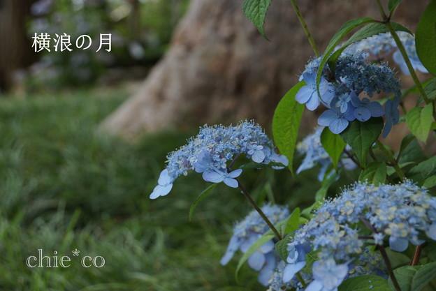 写真: 瀬戸神社~山あじさい-447