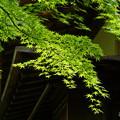 写真: 箱根美術館-178