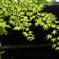 写真: 箱根美術館-179