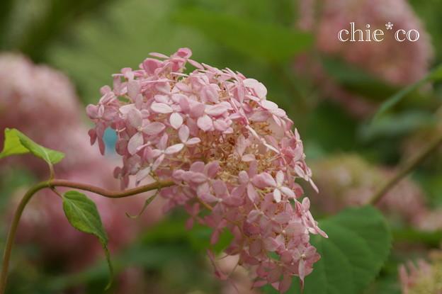 写真: 浄妙寺-118