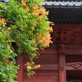 写真: 鎌倉-139