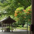 写真: 鎌倉-141