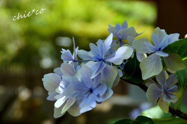 写真: 鎌倉-153