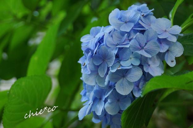 写真: 鎌倉-168