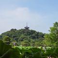 写真: 三渓園-227