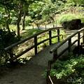 写真: 三渓園-256