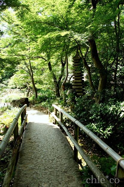 写真: 三渓園-257