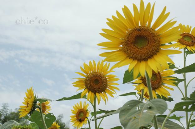 写真: 大賀の郷-052