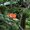 写真: 鎌倉-520