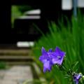 写真: 鎌倉-529