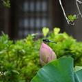 写真: 鎌倉-534