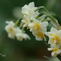 写真: 吾妻山公園-168