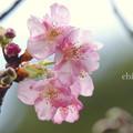 吾妻山公園-207