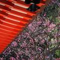 写真: 鎌倉-226