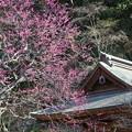 写真: 鎌倉-225
